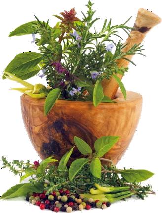 homeopatia zaragoza dra solsona